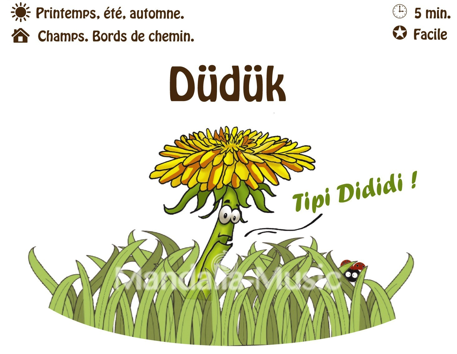 DUDUK : Le pissenlit hautbois (Flutin des bois)